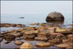 Gull on Rocky Beach